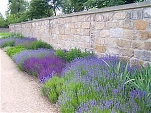 Pflege Von Lavendel : lavendel pflege lavendel schneiden pflege lavandula ~ Lizthompson.info Haus und Dekorationen