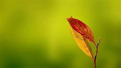 Macro Leaves Wallpapers Leave Unknown Posted Am