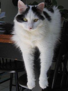 cat urinary blockage recovery 1000 images about happy animal stories on