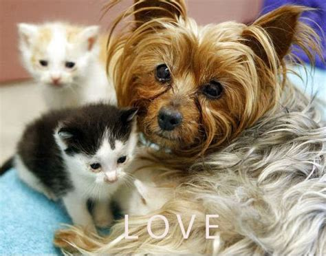 Ee  Miniature Ee   Yorkshire Terrier Cute  Ee  Dog Ee   P Os To Make You Smile