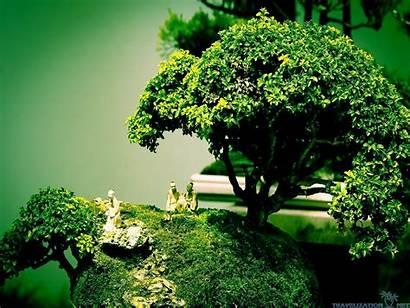 Bonsai Tree Wallpapers Japanese Drawing Backgrounds Desktop