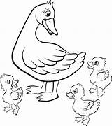 Duck Coloring Pages Duckling Ducklings Mallard Hunting Drawing Easter Ducks Printable Colouring Getcolorings Way Quack Kind Wood Vector Colourbox Walk sketch template