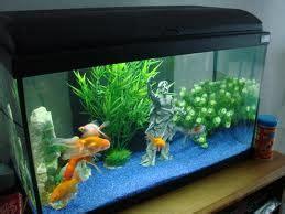 plante pour aquarium d eau froide flore aquatique le de moune1