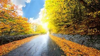 1080p Nature Yellow Wallpapers Scenery Autumn Roads