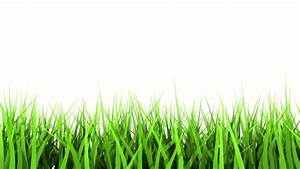 Green Grass On White Background. Matte Channel.: Royalty ...