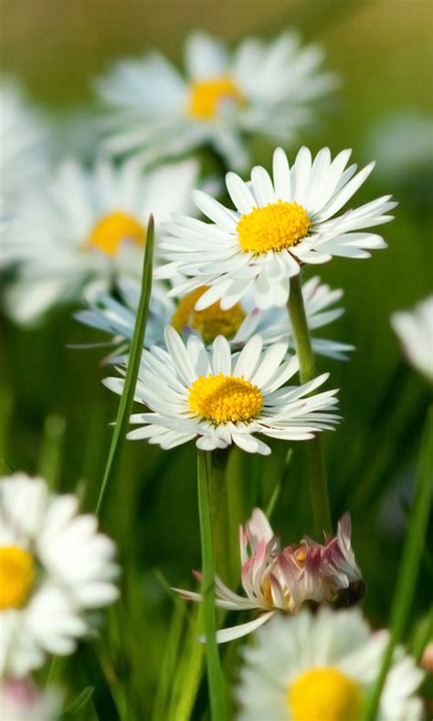 Spring Wallpapers Free Apk Android App  Android Freeware