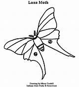 Coloring Moth Luna Dnr Printable 78kb 550px Getcolorings Getdrawings sketch template
