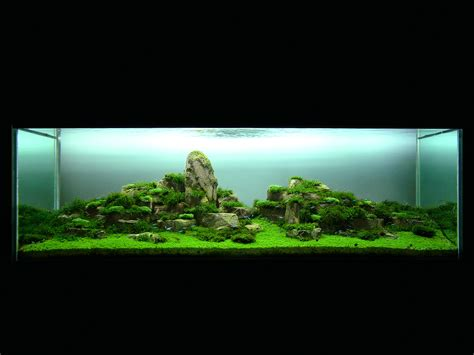 Planted Aquarium Aquascaping by Aquascaping World Magazine World Before Columbus
