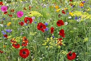 semer un tapis de fleurs detente jardin With tapis champ de fleurs avec canapé de bureau