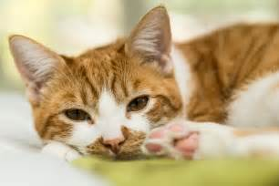 cats cats became pets much earlier than thought according to
