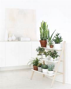 TDC Interior Styling Indoor Plants