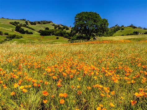 naturalist flowers mount diablo