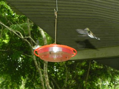 hummingbird feeder picture of panama rainforest