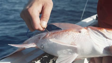 fish vent dylan hubbard capt offshore properly