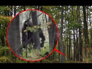 6 Most Believable BIGFOOT Sightings / Footage - YouTube
