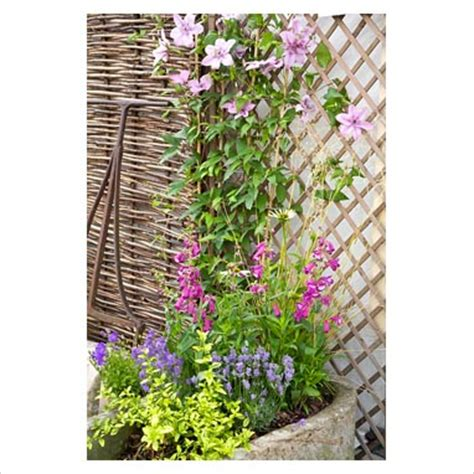 gap photos garden plant picture library clematis in