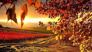 Autumn Lights Picture: Autumn In The Vineyard