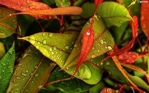 Leaves, Wallpapers, Colorful, Leaves, Wallpapers, Image, 19565
