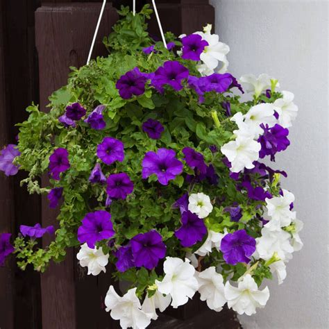 70 hanging flower planter ideas photos and top 10