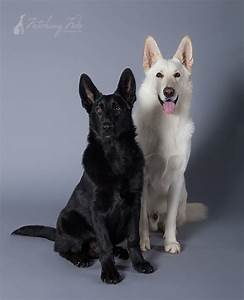 Black And White German Shepherd Dog And Cat Pictures to ...
