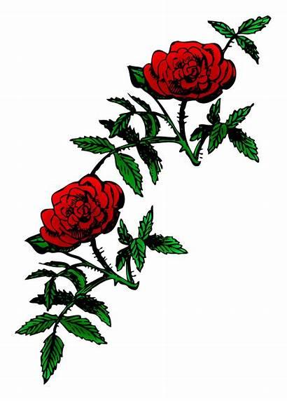 Rose Roses Clip Clipart Domain Decoration Outline