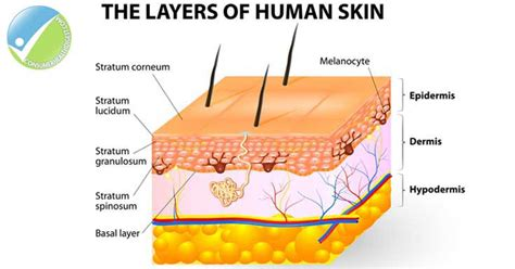 Beyond Skin Deep Understanding The Layers Of The Skin. Pos System For Restaurant Digital Art Design. Find Candidates For Jobs Free. Customer Relationship Manager. Insurance Online Quote Term Rna Seq Protocol. Database Of State Incentives For Renewable Energy. Are Nutrigrain Bars Healthy Major Harris Wvu. Www Irs Gov Tax Payment Options. Colleges With Pharmacy Programs