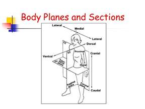 Anatomical Body Planes and Sections