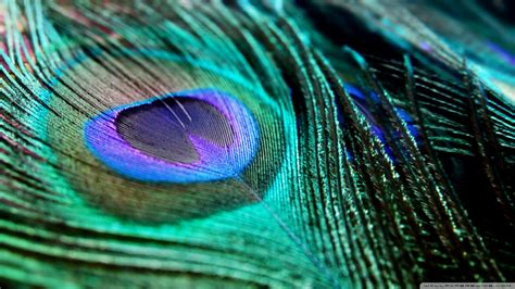 Animated Peacock Wallpapers - peacock feather wallpaper hd
