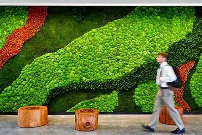 Garden Wall Vertical Plants Walls Interior Preserved