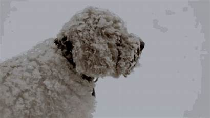 Snow Labradoodle Thunder Gifs Cantore Jim Blizzard