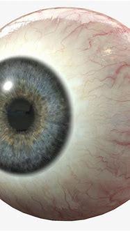 3d eye human iris model