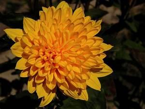 Garten Im Herbst : kathrin russegger garten im herbst herbstblumen ~ Whattoseeinmadrid.com Haus und Dekorationen