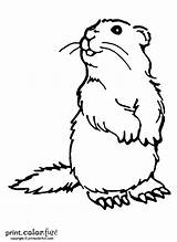 Coloring Woodchuck Pages Groundhog Printables Groundhogs Animal Drawing Colouring Dog Printable Puzzles Printcolorfun Crafts Fun Ink Low Prairie Funny Books sketch template