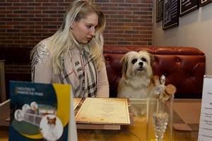 Hotel Pour Chien : bienvenue au critterati le premier h tel de luxe pour chiens ~ Nature-et-papiers.com Idées de Décoration