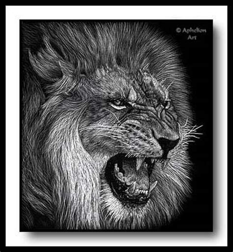 scratchboard art  cathy sheeter snarl