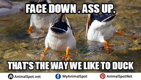Spn Kink Meme Delicious - meme duck 28 images duck memes funny duck memes funny ducks www pixshark com images