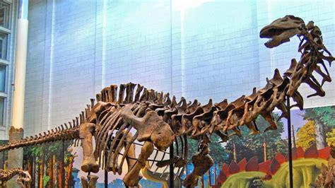 Brontosaurus Is Officially A Dinosaur Again