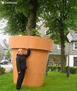 Arbre En Pot : arbre en pot ~ Premium-room.com Idées de Décoration
