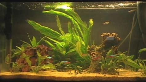 fische für 60 liter aquarium aquarium 60 liter