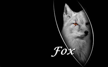 Fox Wallpapers Desktop Cool Silver Pc Wallpapersafari