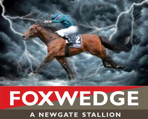 debut winner  foxwedge