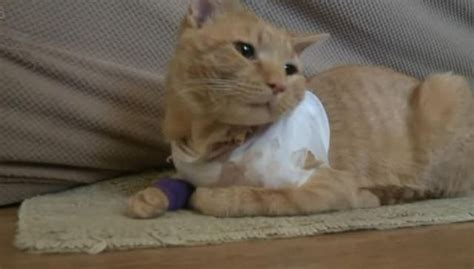 Cat Saves His Young Human's Life By Shielding Him From A