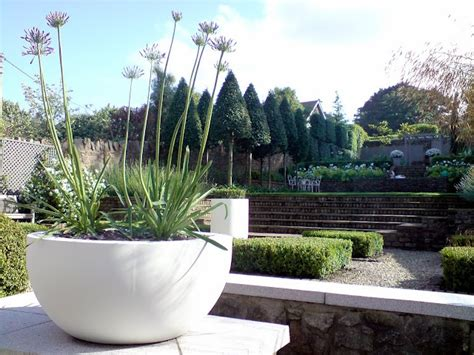contemporary pot plants contemporary planter with agapanthus containers planters pinterest planters white