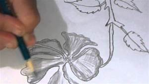 All Types Flowers Pencil Drawings How To Draw And Sketch A ...