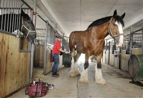 Mount Airy sanctuary works to provide horses with safe ...
