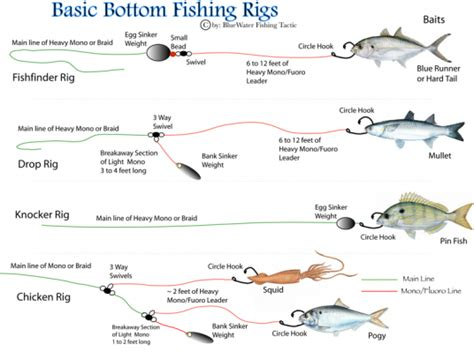rigs fishing bottom basic guide rig fish catfish diagrams comprehensive essential kinds shot source