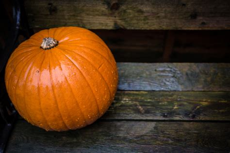 what to make with pumpkin pumpkin free stock photo public domain pictures