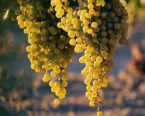 Grapes Wallpapers|HD Grapes Pictures ~ High Definition ...