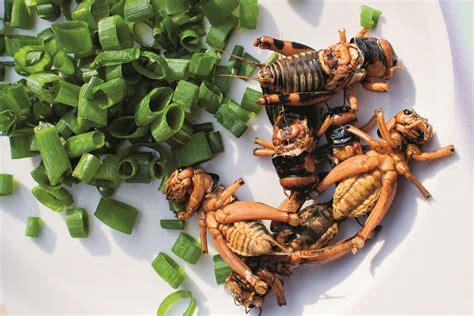 i migliori di cucina mangiare insetti tra i migliori libri di cucina