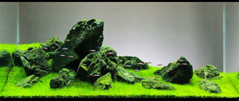 7 Aquascaping Styles For Aquariums